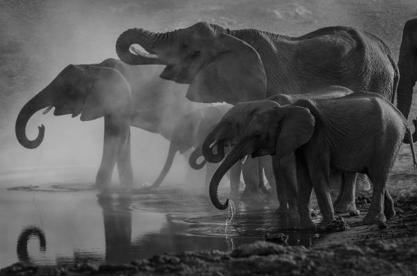 elephants at the waterhole (black and white decorative image)