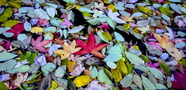 Leaves scattered across the floor - representing bad data management